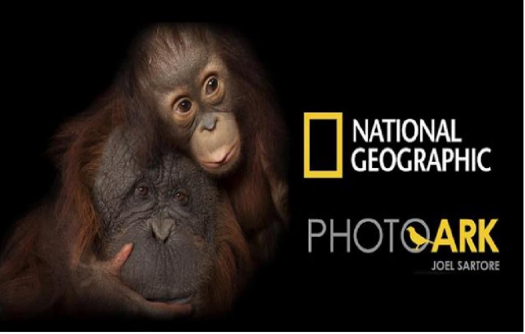 NATIONAL GEOGRAPHIC PHOTO ARK | NOVA ARCADA BRAGA ATÉ 12 JANEIRO 2022